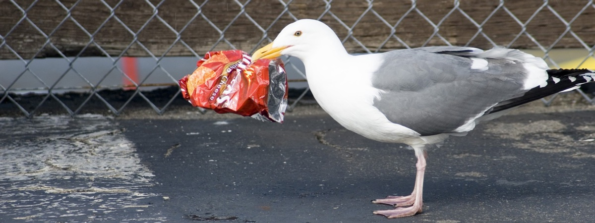 Plastic Bags Image