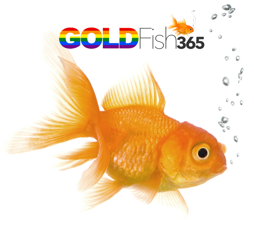 GoldFish Rainbow Audio cover